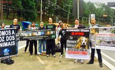 Vozes em luto realiza manifesto pela Jornada Internacional Contra Zoos