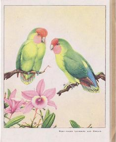 ROSY-FACED LOVEBIRD AND ORCHID-- MADE IN ENGLAND