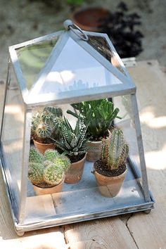 .I like this idea! I have old lantern with broken glass.  Can save it to display small plants.