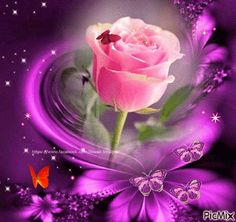 The perfect PicMix Flower Beauty Animated GIF for your conversation. Discover and Share the best GIFs on Tenor. Flowers Gif, Beautiful Rose Flowers, Beautiful Gif, Beautiful Butterflies, Love Flowers, Purple Flowers, Flower Phone Wallpaper, Butterfly Wallpaper, Love Wallpaper