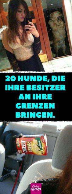 20 Hunde, die ihre Besitzer an ihre Grenzen bringen. #hunde #grenzen #süß