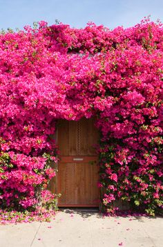These images are part of a larger series of images where pink is the central theme or subject. Beautiful Flowers Garden, Amazing Flowers, Beautiful Gardens, Nature Wallpaper, Mobile Wallpaper, Nature Pictures, Garden Landscaping, Outdoor Gardens, Planting Flowers