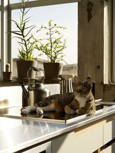 Stovetop kitty#Repin By:Pinterest++ for iPad#
