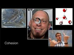 In this video Paul Andersen explains how the polarity of water makes life on the planet possible. Oxygen is highly electronegative and pulls the electrons closely creating a partial negative charge. The polarity of water (and the corresponding hydrogen bonds) create cohesion, adhesion, capillary action, high specific heat, and a universally good solvent.