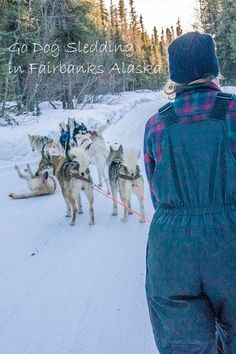 8 things to do in Fairbanks Alaska this winter: dog sledding is an unforgettable experience. Check out 7 other bucket list items