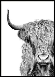 Highland Cow Close Up Poster in Group . Highland Cow Close Up Poster in Group Poster / Insects and Animals at Desenio AB Highland Cow Art, Highland Cattle, Highland Cow Tattoo, Highland Cow Painting, Poster Shop, Poster Prints, Poster 40x50, Gold Poster, Cow Drawing
