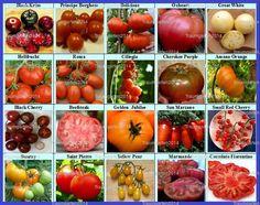 Tomate Set 1: Tomatensamen 20 alte Sorten Fleischtomaten Cherrytomaten Mix Samen de.picclick.com