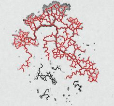 Slime Molds Help Show How Cancer Grows    Smarty-pants slime molds can solve mazes and produce diagrams similar to the Tokyo rail system—and now, scientists suggest, they may also be able to help treat cancer. Biophysicists in Germany and Singapore suggest that mathematical models based on slime mold behavior might lead to new ways to starve tumors of blood.  The slime mold Physarum polycephalum, usually found growing inside rotting logs, forages for food by extending a network of th