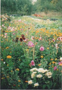 i hope u never die - Garden Types Meadow Garden, Dream Garden, Garden Path, Garden Types, Jolie Photo, Plantation, Wild Flowers, Bouquet Flowers, Meadow Flowers