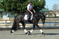 Always Use Your Legs Before Your Hands When Putting Your Horse on the Bit | janesavoie.com