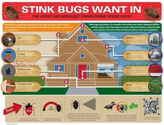 If you are in one of the 41 states that is infested with stink bugs, you will appreciate this helpful info-graphic. Native to China, Korea, Japan and Taiwan, the brown marmorated stink bug is known to attack at least 300 kinds of plants. It also emits a foul odor that's likened to dirty socks.