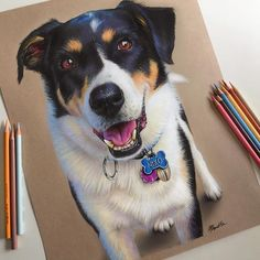 Eclectic Collection of Realistic Drawings - Niko. Eclectic Collection of Realistic Drawings. By Morgan Davidson. Animal Paintings, Animal Drawings, Art Drawings, Drawing Faces, Realistic Pencil Drawings, Color Pencil Art, Art Graphique, Beautiful Drawings, Dog Portraits
