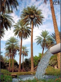 Amazing Gifs, Amazing Nature, Life In Egypt, Persian Architecture, Egyptian Beauty, Baghdad Iraq, Arabian Art, Cairo Egypt, Beautiful Places To Visit