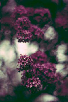 Dark purple flowers <3 Photography } lighting