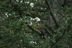 A Bald Eagle is a sure sight in #Alaska on an #Adventure by the Book #travel