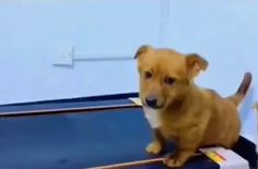 An innocent expression that looks so funny - Cute dogs Happy Animals, Cute Funny Animals, Cute Baby Animals, Funny Dogs, Animals And Pets, Cute Animal Videos, Funny Animal Pictures, Cute Puppies, Cute Dogs