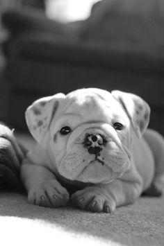 I want I want I want!!!!!