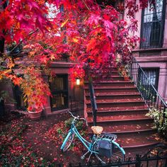 This is Brooklyn last Autumn. New York City in the Fall is the best. Vivienne Gucwa