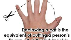 Declawing is something people do without realizing what they're actually doing to their beloved cat.