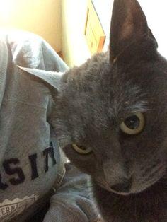 Grisi Selfie