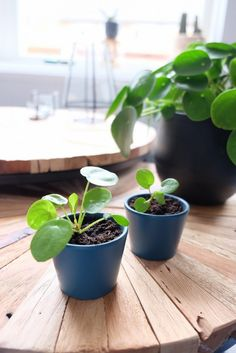 Two cute babies! Indoor Garden, Indoor Plants, Solomons Seal, Easter Baskets, Daffodils, Flower Decorations, Houseplants, Orchids, Planter Pots