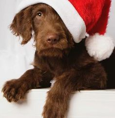 Merry Christmas pooch !!