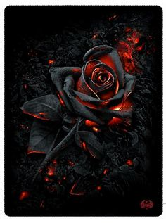 "The ""Burnt Rose"" black fleece blanket by Spiral USA almost makes death look elegant. Curl up in this unique skull fleece blanket from Inked Shop today! Black Roses Wallpaper, Crazy Wallpaper, Skull Wallpaper, Flower Phone Wallpaper, Black Aesthetic Wallpaper, Dark Wallpaper, Skull Rose Tattoos, Black Rose Tattoos, Black Rose Flower"