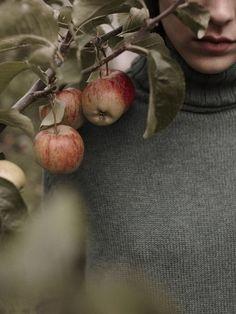 Ένα φρούτο κύλησε στο δρόμο. Ψάχνει για χώμα, για να σαπίσει ήρεμα. Γιάννης Κοντός