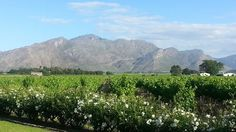 Only an hour's drive from Cape Town along the the beautiful Breedekloof Wine Valley has over 20 wineries spread across the Rawsonville, Slanghoek, Goudini and Breede River areas. Provinces Of South Africa, Most Beautiful Cities, Cape Town, Places To See, Jet Plane, Explore, Wineries, Homeland, Wedding Anniversary