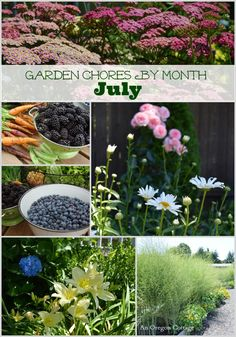 A Handy Checklist of Garden Chores For the Month of July - An Oregon Cottage