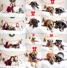 Holiday photos, christmas photos in bed, couples, dogs, dog holiday photo ideas, christmas couples in bed ideas