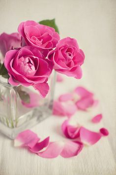Pink roses by Mirka Wolfova on 500px