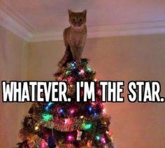Top 10 Cat-mas Holiday Memes