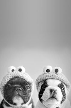 Cute frogs !! Love this *-*