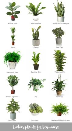 Best Office Desk Plants - Country Home Office Furniture Check more at http://michael-malarkey.com/best-office-desk-plants/