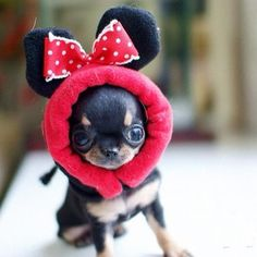 .Am I cute ?♥ Yuppypup.co.uk provides the fashion conscious with stylish clothes for their dogs. Luxury dog clothes and latest season trends, Dog Carriers and Doggy Bling. Next Day Delivery. Please go to http://www.yuppypup.co.uk/