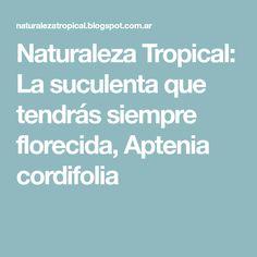 Naturaleza Tropical: La suculenta que tendrás siempre florecida, Aptenia cordifolia