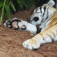 Love kitty feet - Mike VI.