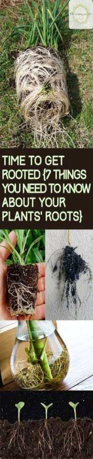 Plant Roots Things You Shuld Know About Your Plants Root System Care Tips for Plant Roots How to Keep Your Plants Healthy Tips and Tricks for Gardening Gardening Tips and. Backyard Plants, Landscaping Plants, Landscaping Ideas, Backyard Ideas, Garden Care, Root System, Organic Gardening Tips, Gardening Hacks, Gardening Tools