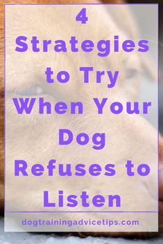 Pet Dogs, Dog Cat, Pets, Dog Activities, Dog Years, Best Dog Breeds, Dog Behavior, Dog Training Tips, Pet Health