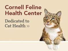 Cornell Feline Health Center