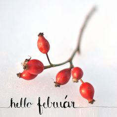 January was a great month, and I finished a lot of goals and got started on many for February. A quick recap of my life in this hello month! Winter, Calligraphy, Glass, Quotes, Blog, Winter Time, Quotations, Lettering, Drinkware