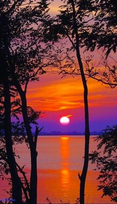 Silhouettes in Sunset ~ Dreamy Nature