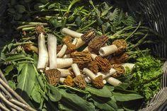 Fotó: Dénes Andrea Carrots, Stuffed Mushrooms, Vegetables, Food, Stuff Mushrooms, Essen, Carrot, Vegetable Recipes, Meals