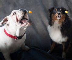 Focus on your goals!! #Entrepreneur #Business #Lifestyle #Wealth #Success #Freedom #Hustle #Passion #Dreams #BusinessOwner #SmallBiz #EntrepreneurLife #Leadership #Ambition #HardWorkPaysOff #GoodLife #BeYourOwnBoss #SmallBusiness#dog #dog #puppy #pets #animals #petstagram #dogsofinstagram #instadog #bulldogsofinstagram  #bulldog #shetlandsheepdog #sheltie #puppy