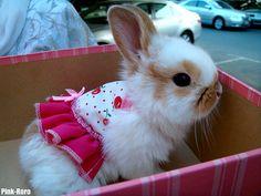bunny in ruffles :3 #bunnies