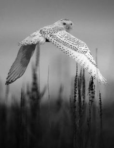 * * TAKE WINGS TO CLIMB THE ZENITH, OR SLEEP IN TREES OF PEACE, BY DAY THE SUN SHALL KEEP THEE, BY NIGHT THE RISING STAR.    [Egyptian Book of the Dead