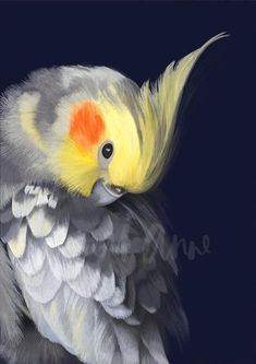 New Holland Honeyeater in a Banksia Tree Limited Edition Print – Lamai Anne Australian Birds, Australian Artists, Bird Drawings, Animal Drawings, Bird Sketch, Animal Sketches, Cockatiel, Bird Prints, Limited Edition Prints