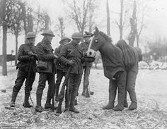 Playful: During rehearsals for the pantomime Cinderella, the 'horse' takes time out to meet his audience near Bapaume on the Somme, January 2, 1918. A light-hearted performance brought Christmas cheer to the Front.