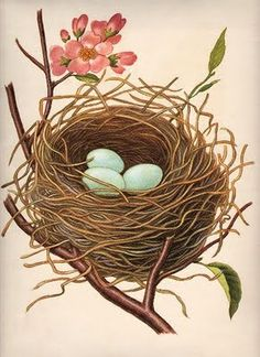 Click above to enlarge This is a gorgeous vintage clip art image of a nest with perfect blue Robin's eggs!!!